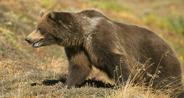 Wyoming game and fish hears ideas on grizzly bear for Wyoming game and fish jobs