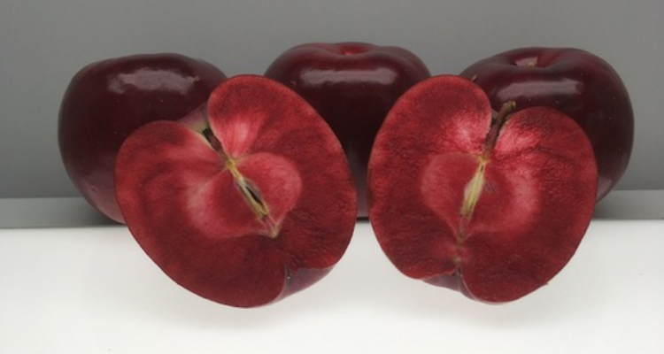 Forbidden Fruits: How Lost Apple Varieties Could Help The